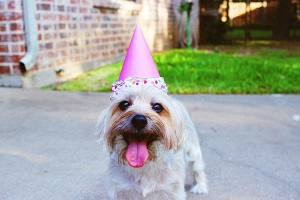 Birthday Video Ideas for Ones You Care